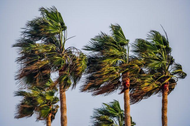 vent palmier